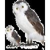 Owls - Zwierzęta -
