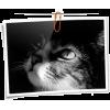 Photo - Articoli -