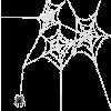 Spider - 动物 -