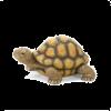 Turtle - Animais -