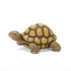 Turtle - Animales -