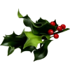 mistletoe - Plants -