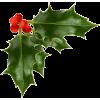 mistletoe - Rośliny -