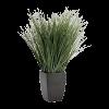 biljka - Illustrations -