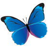 butterfly01 - Illustrations -