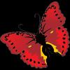 butterfly12 - Illustrazioni -