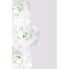 Roses - Pozadine -