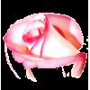Rose - Illustrations -