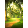 Forest - Background -