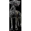 Dog - Tiere -