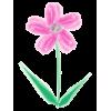 Flower - Ilustracje -