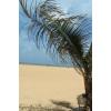 Beach - Fundos -