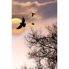 Nature - Sfondo -