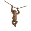 monkey - Animali -