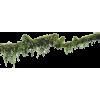 moss tree branch - Natura -