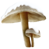 Mushrooms Plants Brown - Plants -