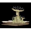 Mushrooms Black Plants - Plantas -