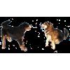 my edits - Animals -