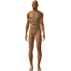 male arms lowered front - Figure -