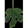 smokvin list female - Figure -