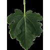 smokvin list male - Figura -