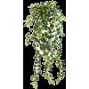 my items - 植物 -