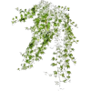 my items - Plants -