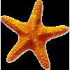 ocean - Items -