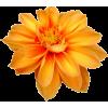 Orange Flower 1 - 植物 -