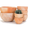 orange - Plants -