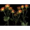 orange flowers photo - Uncategorized -