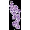 orchid flower spray - イラスト -