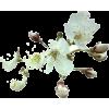 tree flower - Plants -
