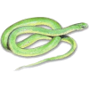 snake - Animals -