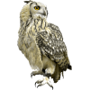 owl - Animals -