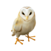 Owl Beige - Illustrations -