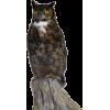 owl - Predmeti -