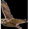 owl in flight - Animals -