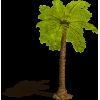 Palm - Piante -