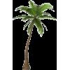 palm - Plants -