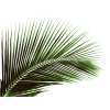 palm - 植物 -