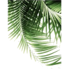palm leaves - Nature -