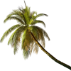palm tree - Plants -