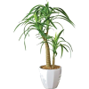 palm tree in pot - Plants -