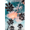 palm trees photo - Uncategorized -