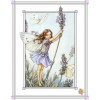lavanda - Background -