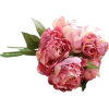peonies - Plants -