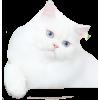 pet - Schals -