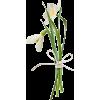 pic - Plants -