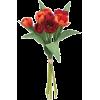 pic - Plantas -